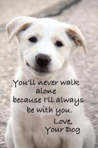 dog_you_ll_never_walk_alone